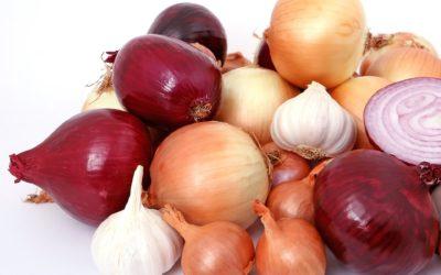 ČESKÁ cibule od našich regionálních pěstitelů je tím nejlepším základem každé kuchyně